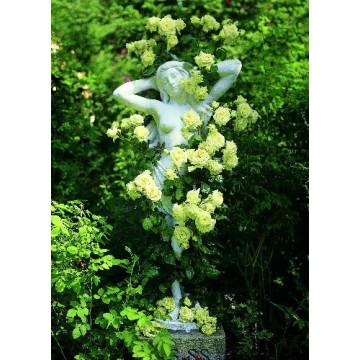 Rose L' ALCAZAR ® Tanefle