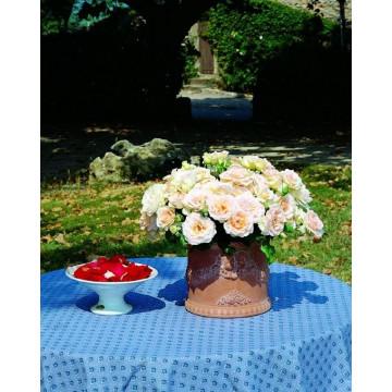 Rosa JOHANN STRAUSS ® Meioffic