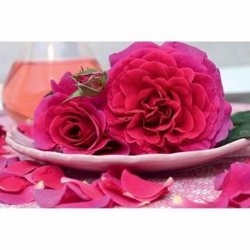 Rosa PURPLE VOLUPTIA ®...