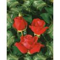 Rosa NUAGE PARFUME ® Tanellis