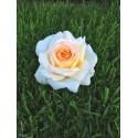 Rose STEM 90 cm ANASTASIA ® Adamariat